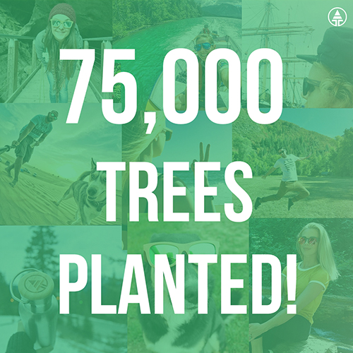75,000 trees planted on Earth!